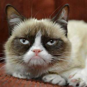 There is a suspicion the Grumpy Cat's demeanour is a ploy to make money. The cat may actually quite happy inside