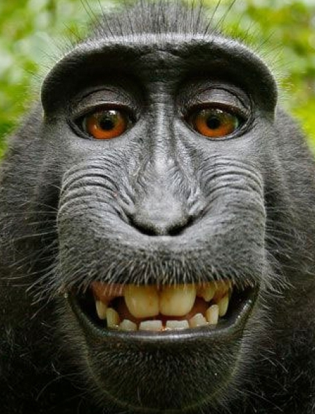 animal-smiling